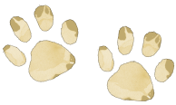 Loba The Leopard Paw Prints - Squish